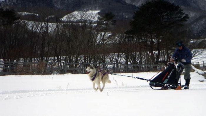 自分のペースで走る高齢犬